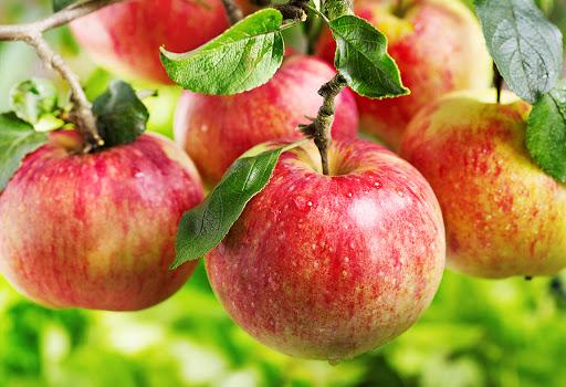 giấm táo có thể giúp tiêu diệt vi khuẩn có hại