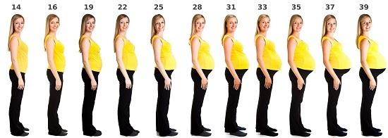 Mang thai tăng bao nhiêu cân là đủ?